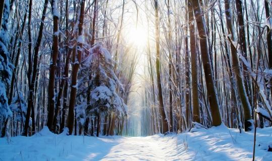 Cygański las